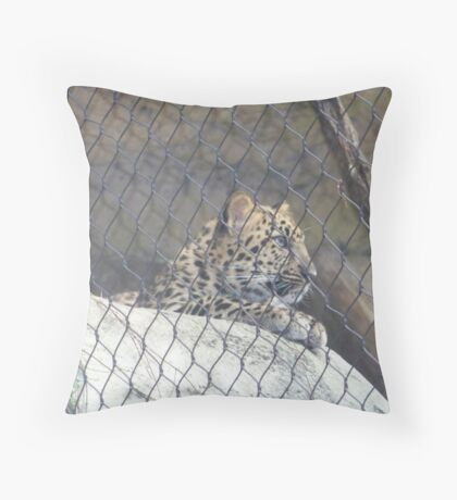 Curiousity Of A Large Cat Throw Pillow