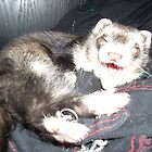 Yawning ferret by Laura60