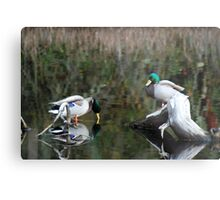Ducks In the Water Metal Print