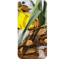 A Late Winter Day iPhone Case/Skin