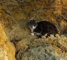 Gozitan cat 2 by M G  Pettett