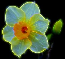 Incandescent by Judy Vincent