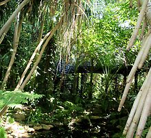Inside the Bicentennial Conservatory. by elphonline