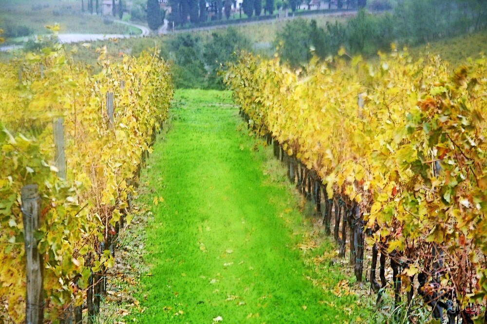 Lamole-Chianti-Toscany on raining day by gluca