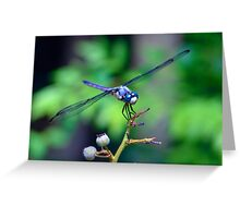 Dialogue With a Dragonfly Greeting Card