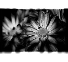 00392 Photographic Print