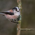 Long-tailed Tit by M.S. Photography/Art