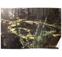Spiky Gorse Poster