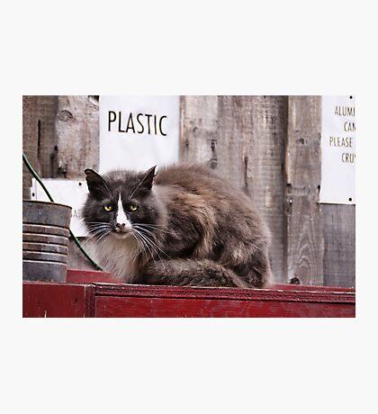 Please recycle Photographic Print