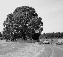 Elder Oak Plaza by MHoldahl68