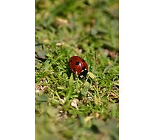 LadybugLove_Tall Photographic Print