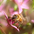 bee blur by rozdesign