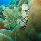 Corals by Marco Heising