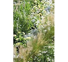 Field of Happiness Photographic Print
