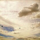 Galahs in Flight by vixstix