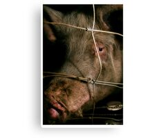 behind the wire Canvas Print