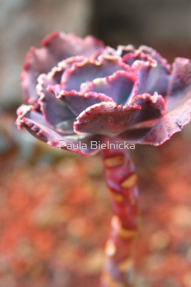 Succulent by Paula Bielnicka