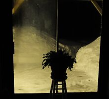 Rhipsalidopsis gaetneri by lumiwa