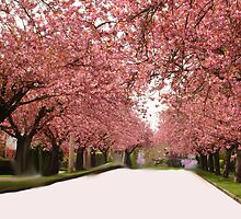 Cherrytree Blossoms by memaggie