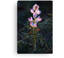 Lupin Flower Canvas Print