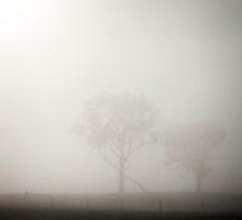 Morning Fog in Gungahlin (2) by Wolf Sverak