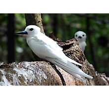 Seychelles white bird Photographic Print