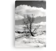Windblown on the Dune Canvas Print