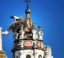 Storks in Evora, Portugal by Monica Di Carlo