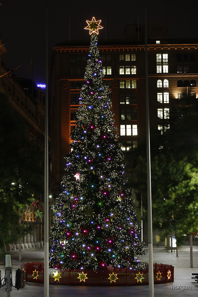 Xmas in Martin Place, Sydney. by norgan