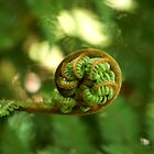 Koru by Michael Fotheringham Portraits