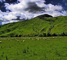 The New Zealand Countryside by Robyn Carter