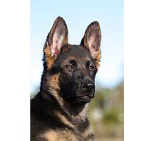 German Shephard Puppy Photographic Print