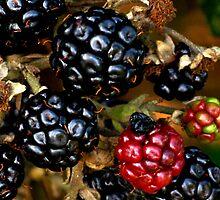 Berries in winter by elenmirie