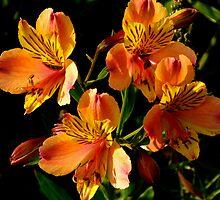 Orange Flowers by elenmirie