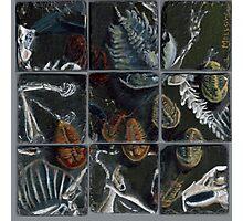 Haldane's Precambrian Puzzle (config.B):  true trilobite Photographic Print