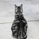 Contemplating Cat by Sandra Chung