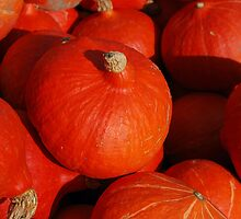 Hokkaido Pumpkins by Rowan  Lewgalon