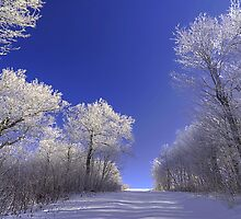 A Late Winter Journey by James Hoffman