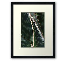 Succulent Sharp Framed Print