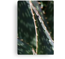 Succulent Sharp Canvas Print