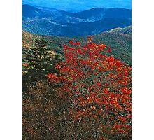 MOUNTAIN ASH, GREAT SMOKY MOUNTAINS NP Photographic Print