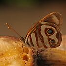 Blue-Eyed Sailor Butterfly by Robert Abraham