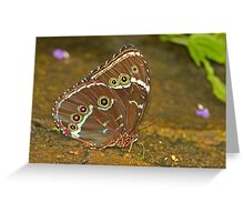 Richard's Morpho Butterfly Greeting Card