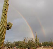Color in Desert Sky  by Judy Grant