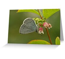Holly Blue Butterfly Greeting Card