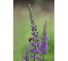 Beauty of the Gardens Photographic Print
