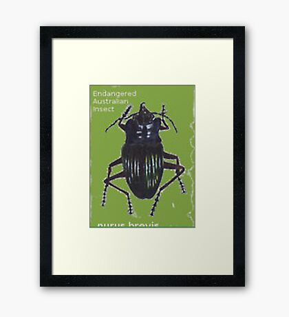 Endangered Insect Framed Print