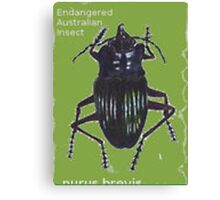 Endangered Insect Canvas Print