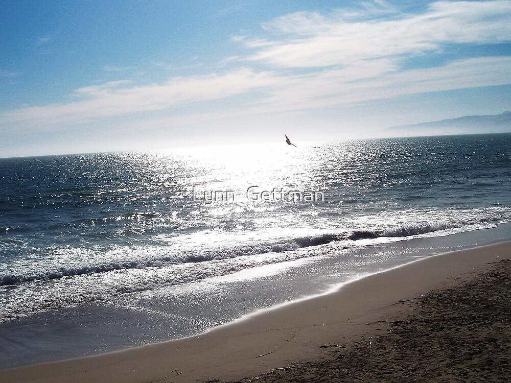 Softly Sandy by Lynn  Gettman