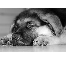 Sleeping Puppy Photographic Print